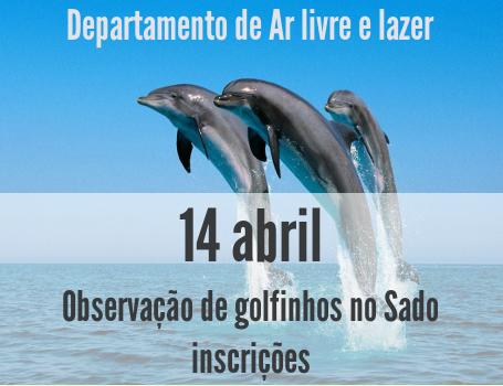 Observação de Golfinhos no Sado